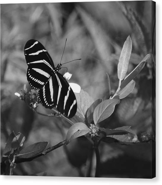 Tiger Stripe Butterfly Canvas Print