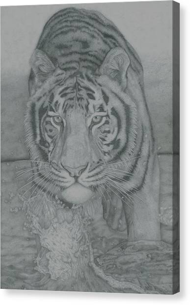 Tiger Through Water Canvas Print by Rich Colvin