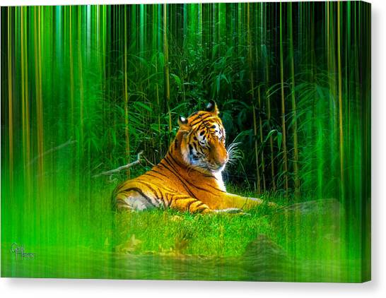 Tigers Misty Lair Canvas Print