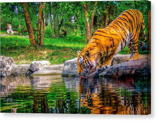 Tigers Pond Canvas Print