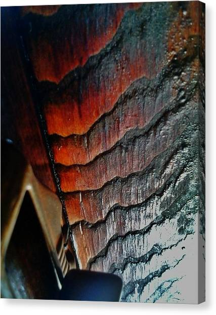 Tigerwood Canvas Print by Jaime Neo