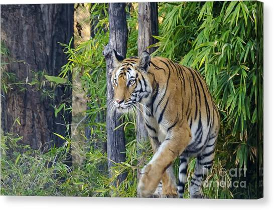 Tiger International Day Canvas Print