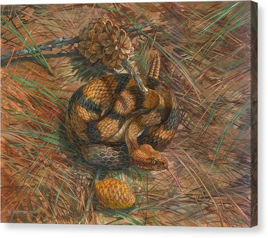 Timber Rattlesnakes Canvas Print - Timber Rattlesnake by ACE Coinage painting by Michael Rothman
