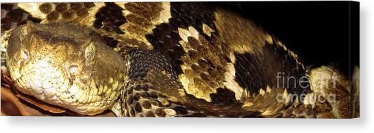 Timber Rattlesnakes Canvas Print - Timber Rattlesnake Macro by Joshua Bales