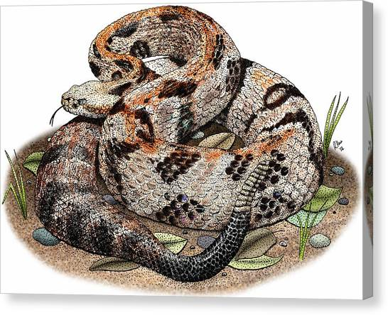 Timber Rattlesnakes Canvas Print - Timber Rattlesnake by Roger Hall