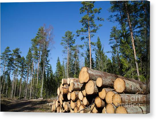 Rights Managed Images Canvas Print - Timber Stack Of Whitewood by Kennerth and Birgitta Kullman