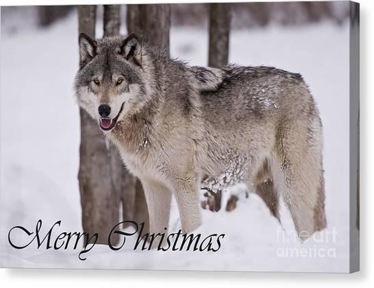 Timber Wolf Christmas Card English 3 Canvas Print