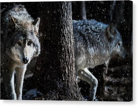 Timber Wolves In The Snow Canvas Print