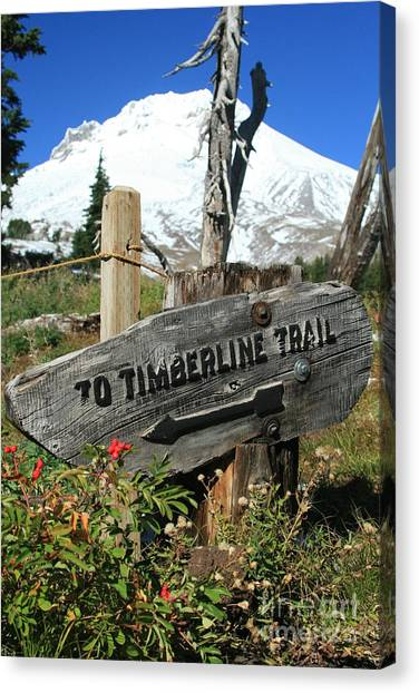 Timberline Trail Canvas Print by Cari Gesch