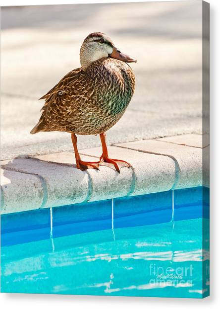Time For A Dip II Canvas Print