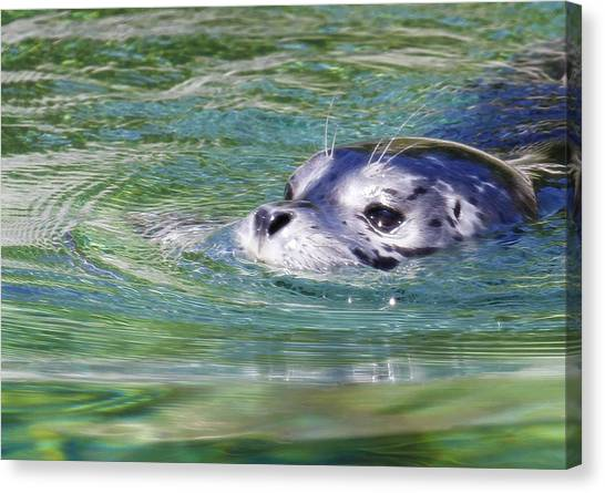 Canvas Print - Time For A Swim by Steve McKinzie