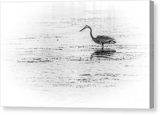 Sandpipers Canvas Print - Time For Fast Food by Marvin Spates