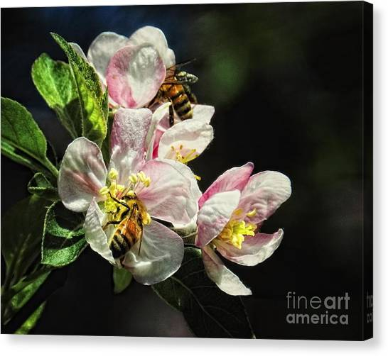 Time To Make The Honey Canvas Print