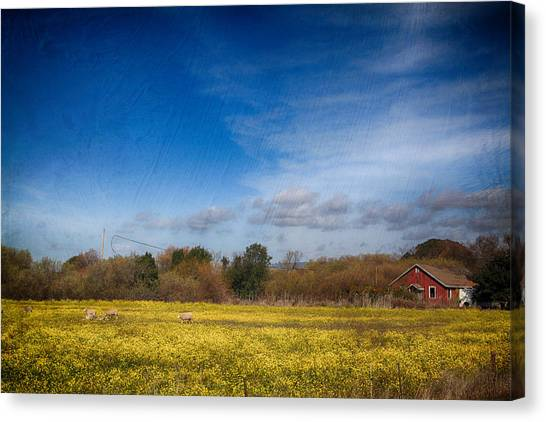 Mustard Canvas Print - Times Like These by Laurie Search