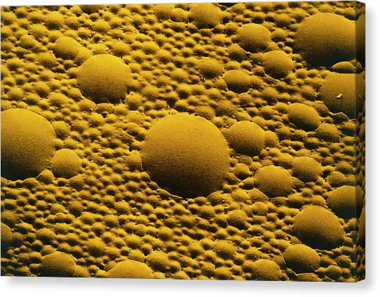 Mayonnaise Canvas Print - Tinted Sem Of Mayonnaise by Dr Jeremy Burgess/science Photo Library.