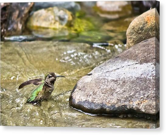 Canvas Print featuring the photograph Tiny Bather by Priya Ghose