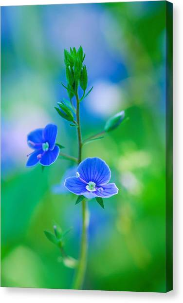 Tiny Bloom Canvas Print