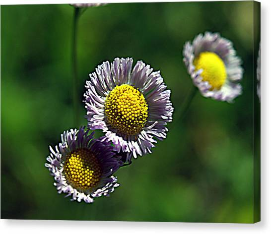 Tiny Little Weed Canvas Print