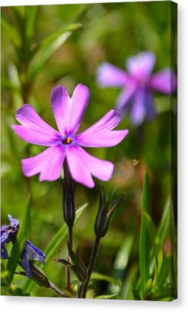 Tiny Purple Flower #1 Canvas Print