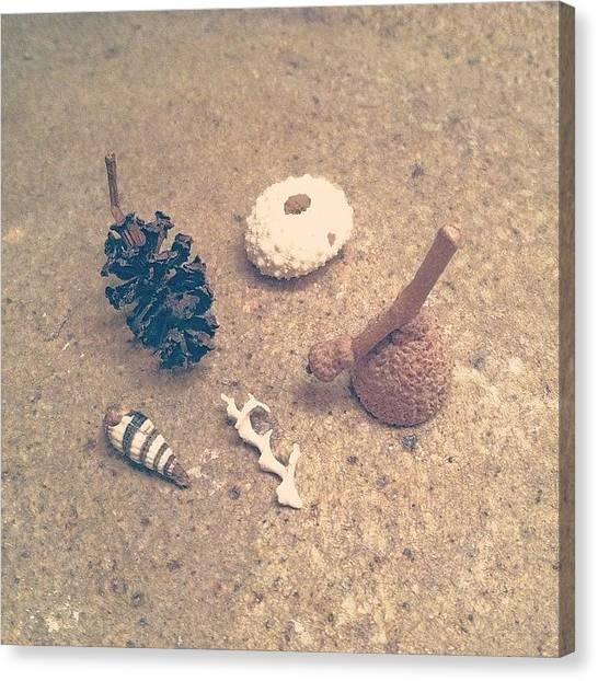 Seashells Canvas Print - Tiny Treasures by Elisa Yinh