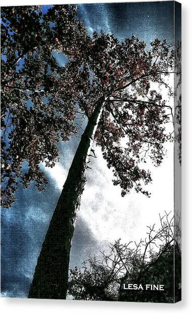 Tippy Top Tree II Art Canvas Print