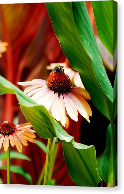 To Be A Bee Canvas Print