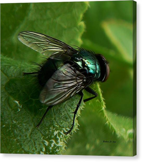 To Be The Fly On The Salad Greens Canvas Print