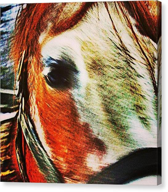 Horse Farms Canvas Print - to Many, The Words Love, Hope, And by Sarah Watson