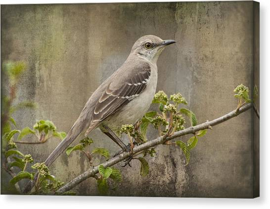 To Still A Mockingbird Canvas Print