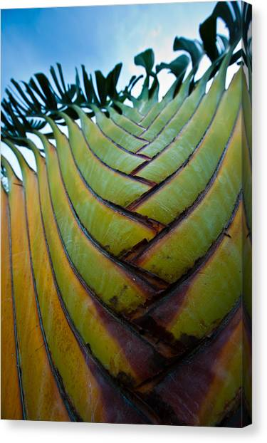 Palm Tree Canvas Print - To The Sky by Sebastian Musial