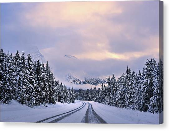 Fir Trees Canvas Print - To The Wonderland by Mei Xu