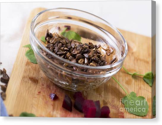 Watercress Canvas Print - Toasted Sunflower Seeds by Charlotte Lake