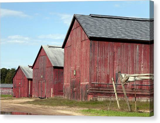 Tobacco Barns In Windsor Connecticut Canvas Print