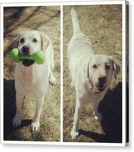 Labrador Retrievers Canvas Print - Toby & Zoey.  #bestdogs by Cori Pishkin