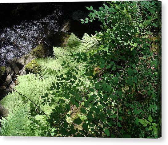 Tod Creek  Canvas Print