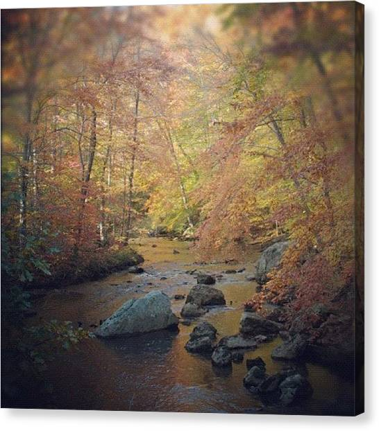 Autumn Leaves Canvas Print - Today! #ridleycreek #park #woods #trees by Stephanie Tomlinson