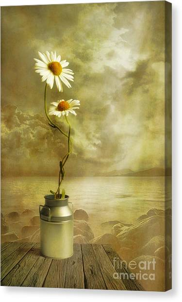 Daisy Canvas Print - Together by Veikko Suikkanen