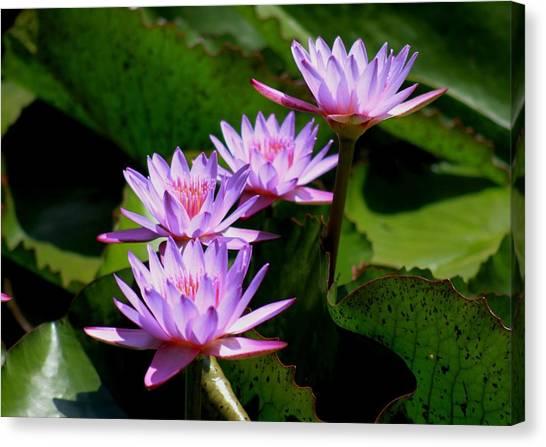 Together We Bloom - Violet Lily Canvas Print