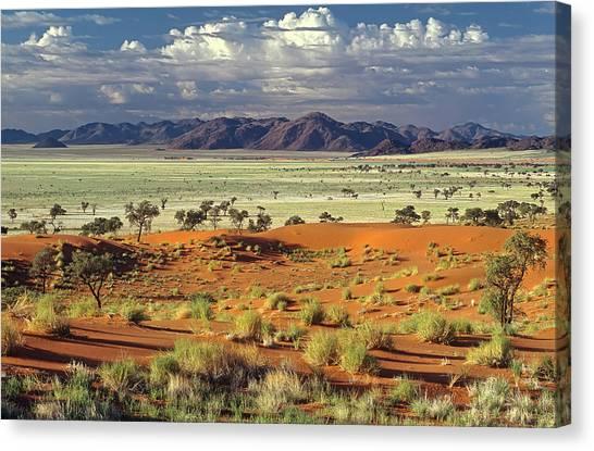 Sand Dunes Canvas Print - Tok Tokkie Desert by Marc Pelissier