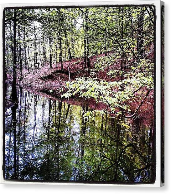 Fishing Canvas Print - Toledo Bend Creek by Scott Pellegrin