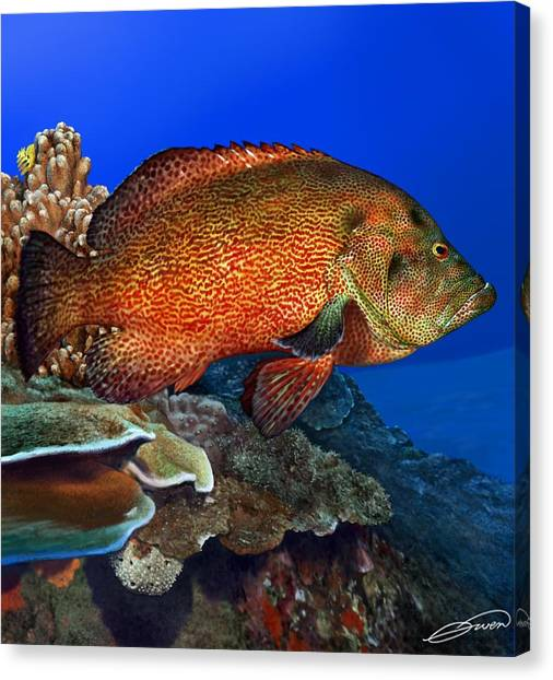 Tomato Grouper Canvas Print by Owen Bell