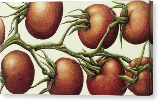 Salad Canvas Print - Tomato Vine, 1999 Wc On Paper by Annabel Barrett