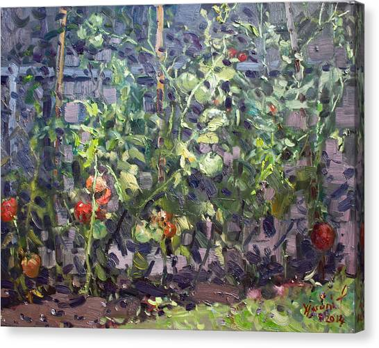 Tomato Canvas Print - Tomatoes In Viola's Garden  by Ylli Haruni