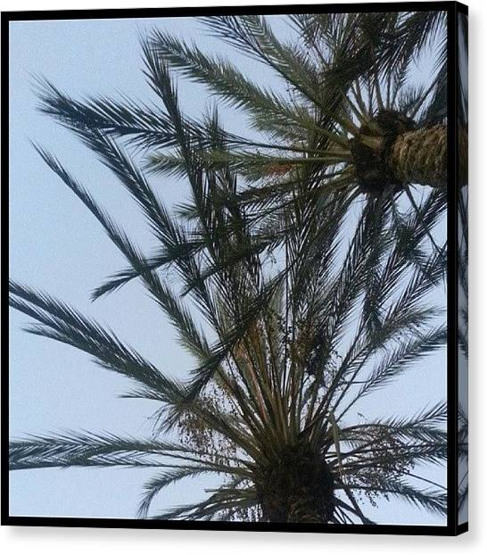 Palm Trees Sunsets Canvas Print - Tonight's End Of The Day Courtesy Of by Kevin Previtali