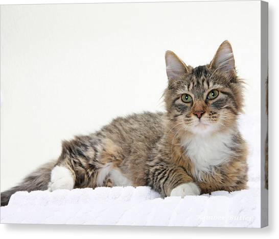 Too Cute Tabby  Canvas Print