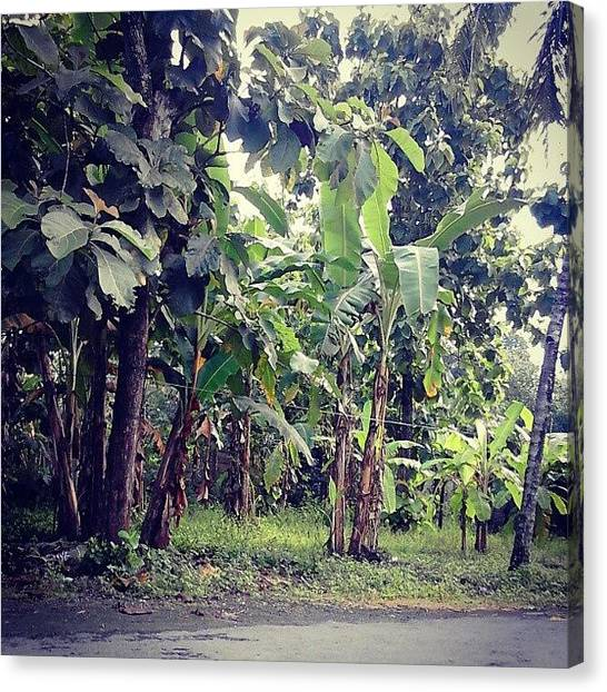 Banana Tree Canvas Print - Too Shady For Growing Peppers???? by Aan Pratama