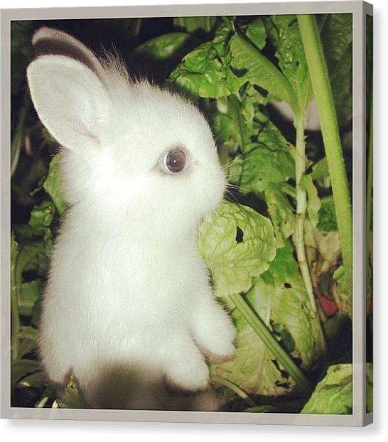 Lettuce Canvas Print - #toocute #baby #bunny In The #garden by Katie Ball
