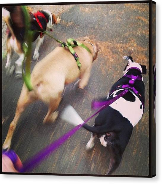 Beagles Canvas Print - Took The family On A Long Walk by Rikki Goodwin