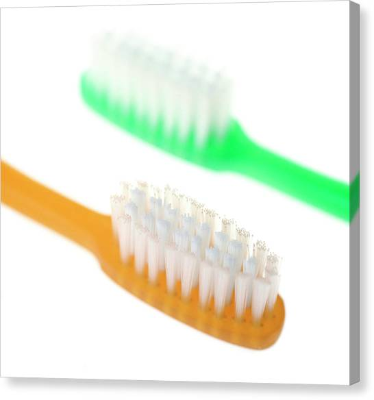Toothbrush Canvas Print - Toothbrushes by Cristina Pedrazzini/science Photo Library