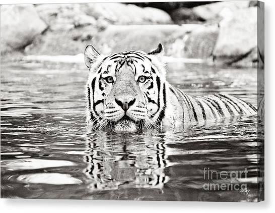 Louisiana State University Lsu Canvas Print - Top Cat -bw by Scott Pellegrin